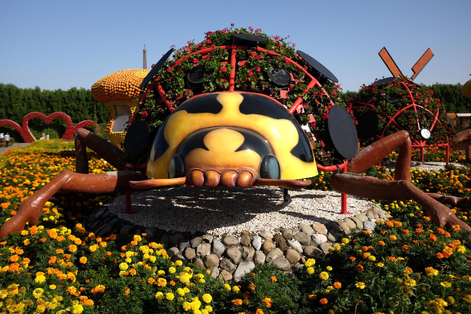 Dubai Miracle Garden - Beetle