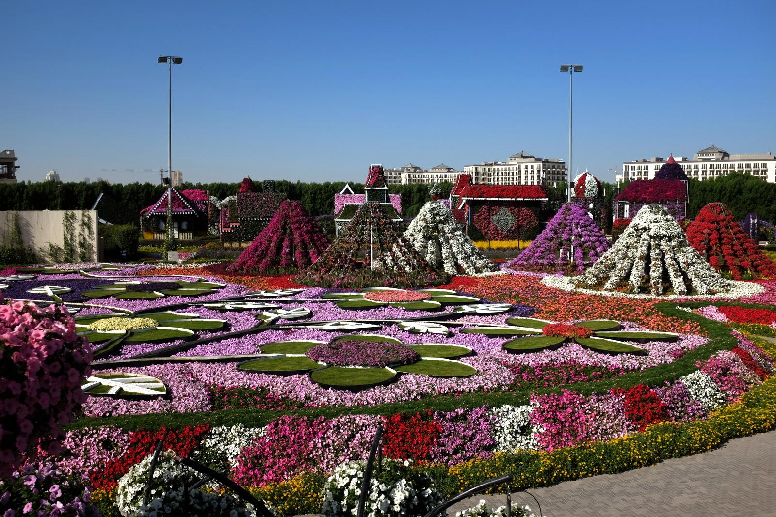 Dubai Miracle Garden -  Flowers