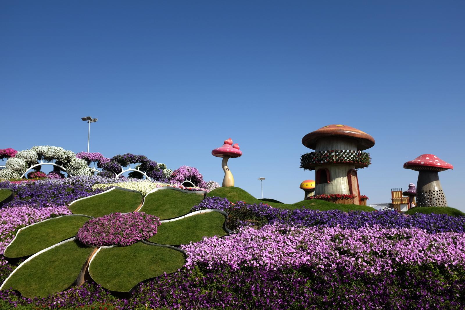 Dubai Miracle Garden - Mashrooms