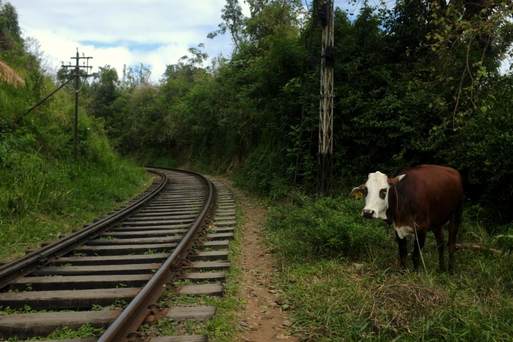 Railway from Ella