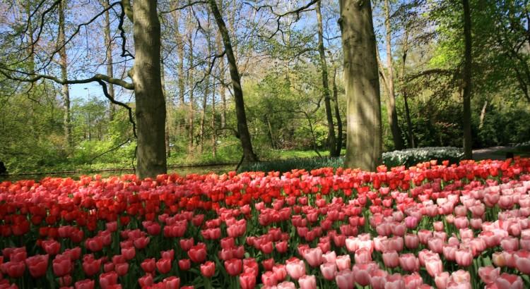 Keukefhof - tulips