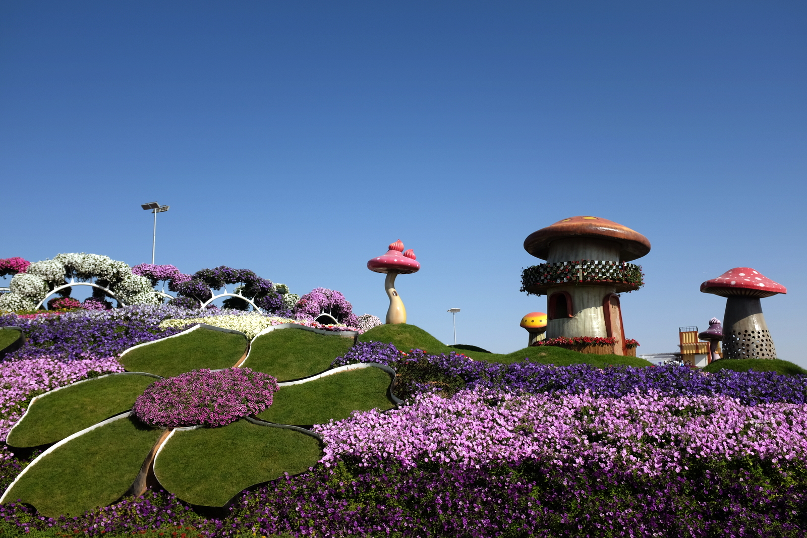 Dubai Miracle Garden - Mashrooms