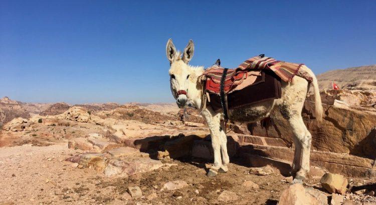 Oslík - Petra v Jordánsku