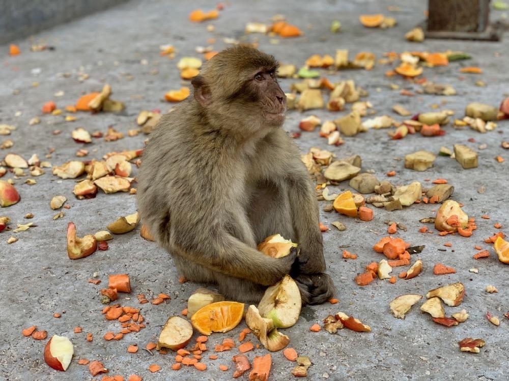 Opičák na svačině