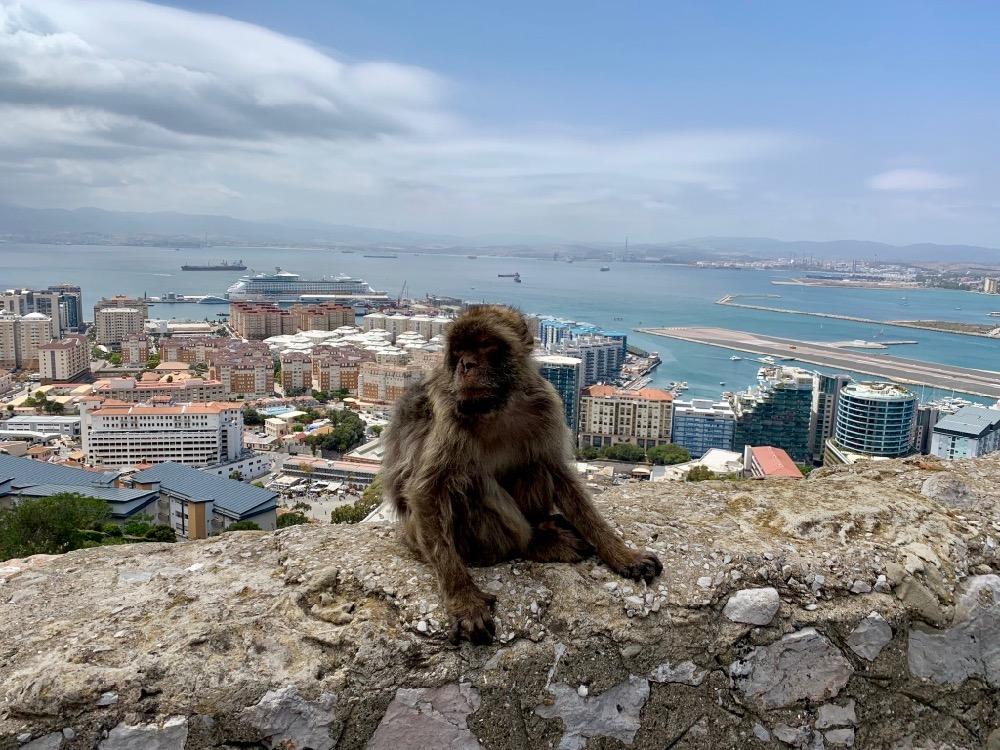Opičák nad městem