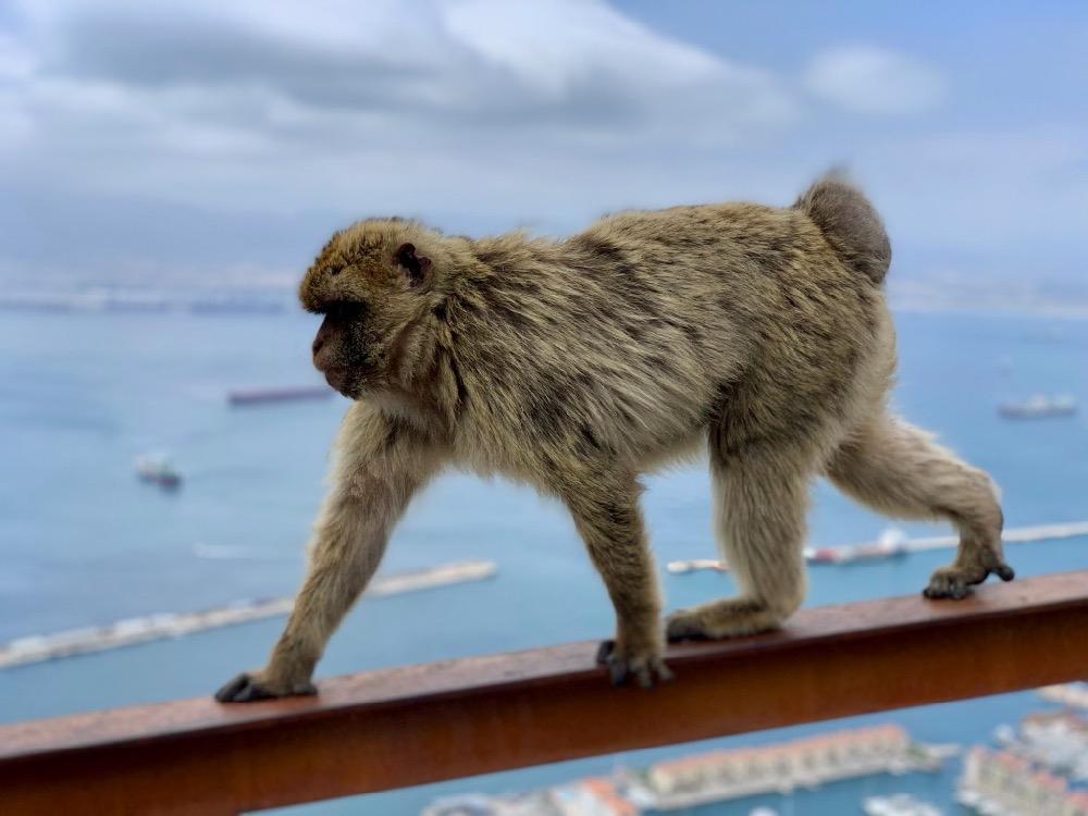 Opičák v běhu