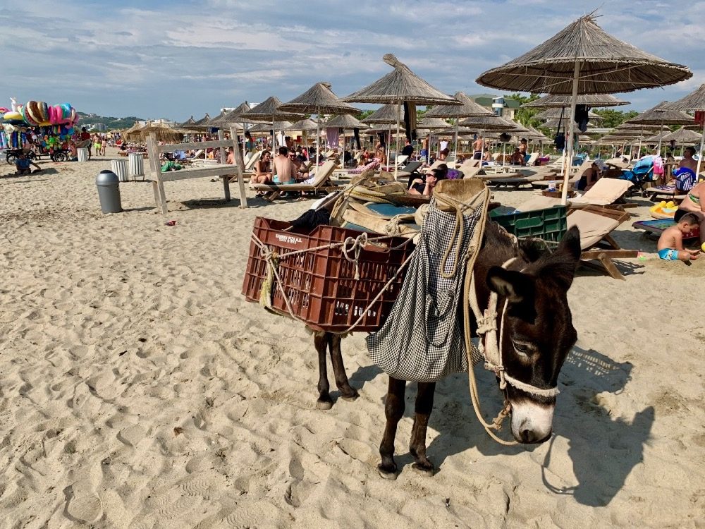 Oslík na pláži Golem