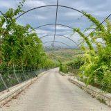Albánie: Farma Pema e Jetes a pláž Golem u Durrës